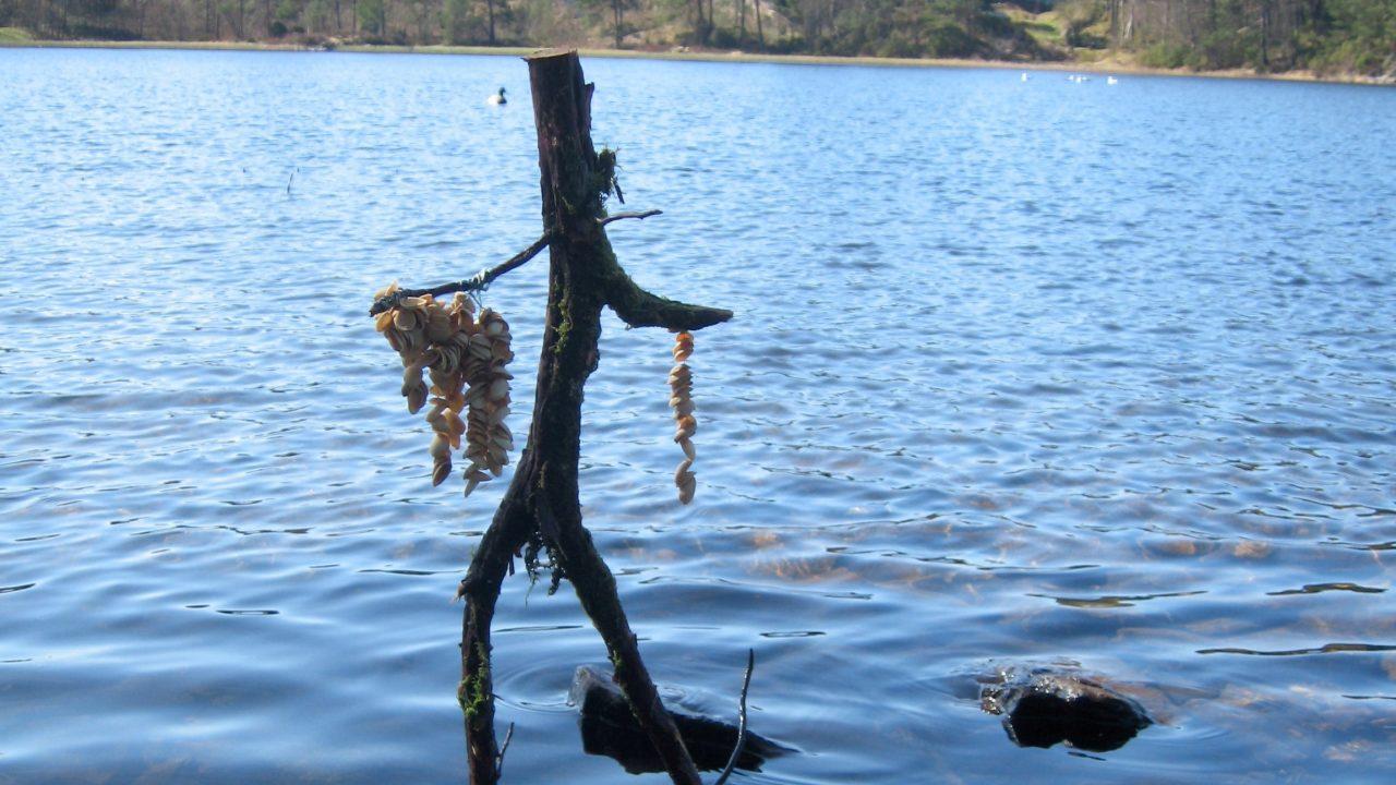 Trefigur som står i vannet.