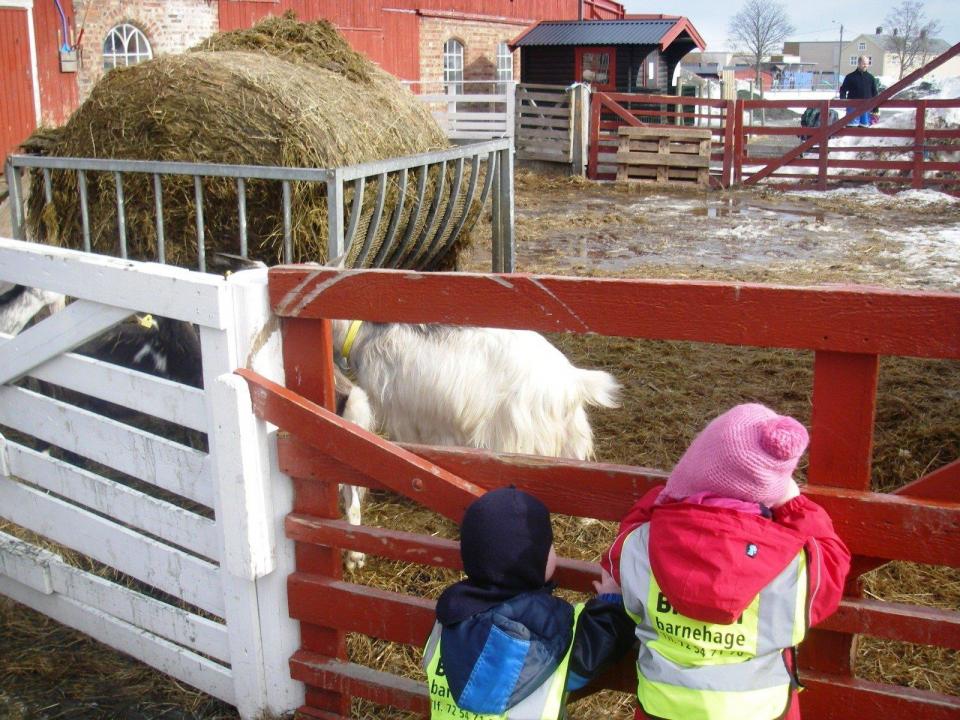 Barn på gårdsbesøk.
