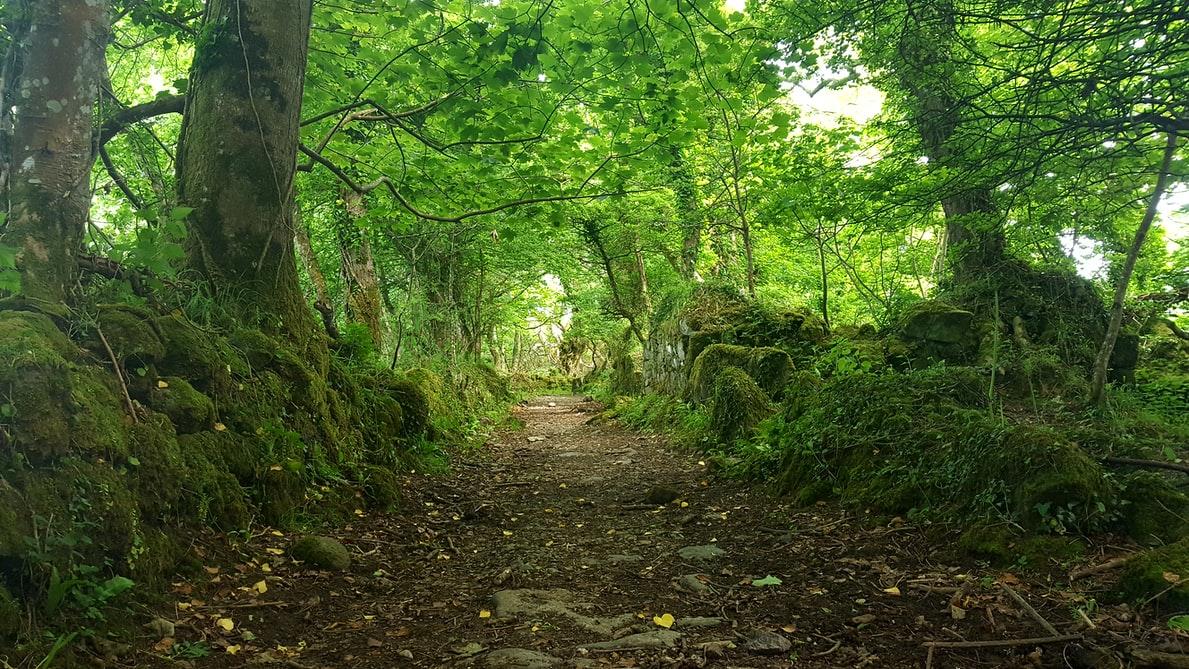 Grønn skog med en sti