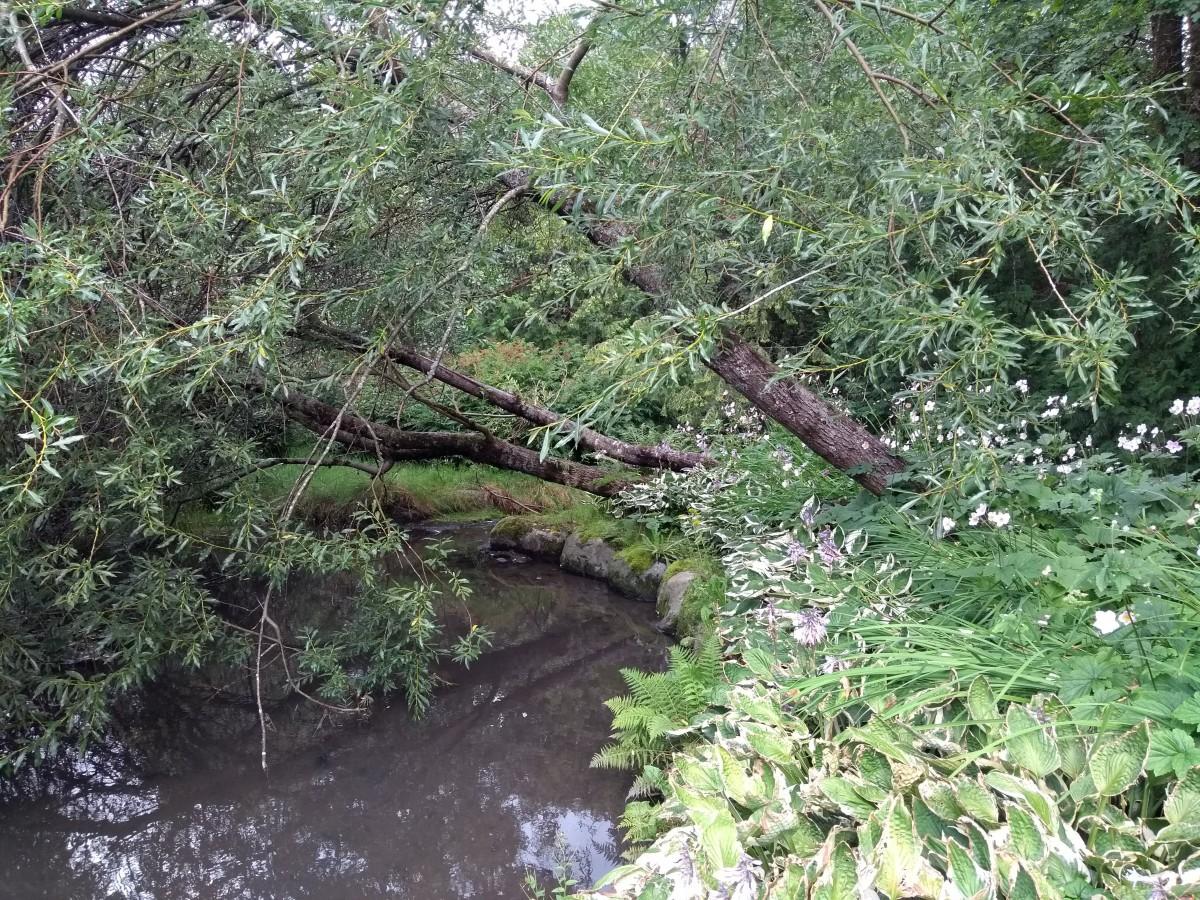 Parkområde med trær og vann.
