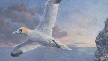 Maleri av havsuler.