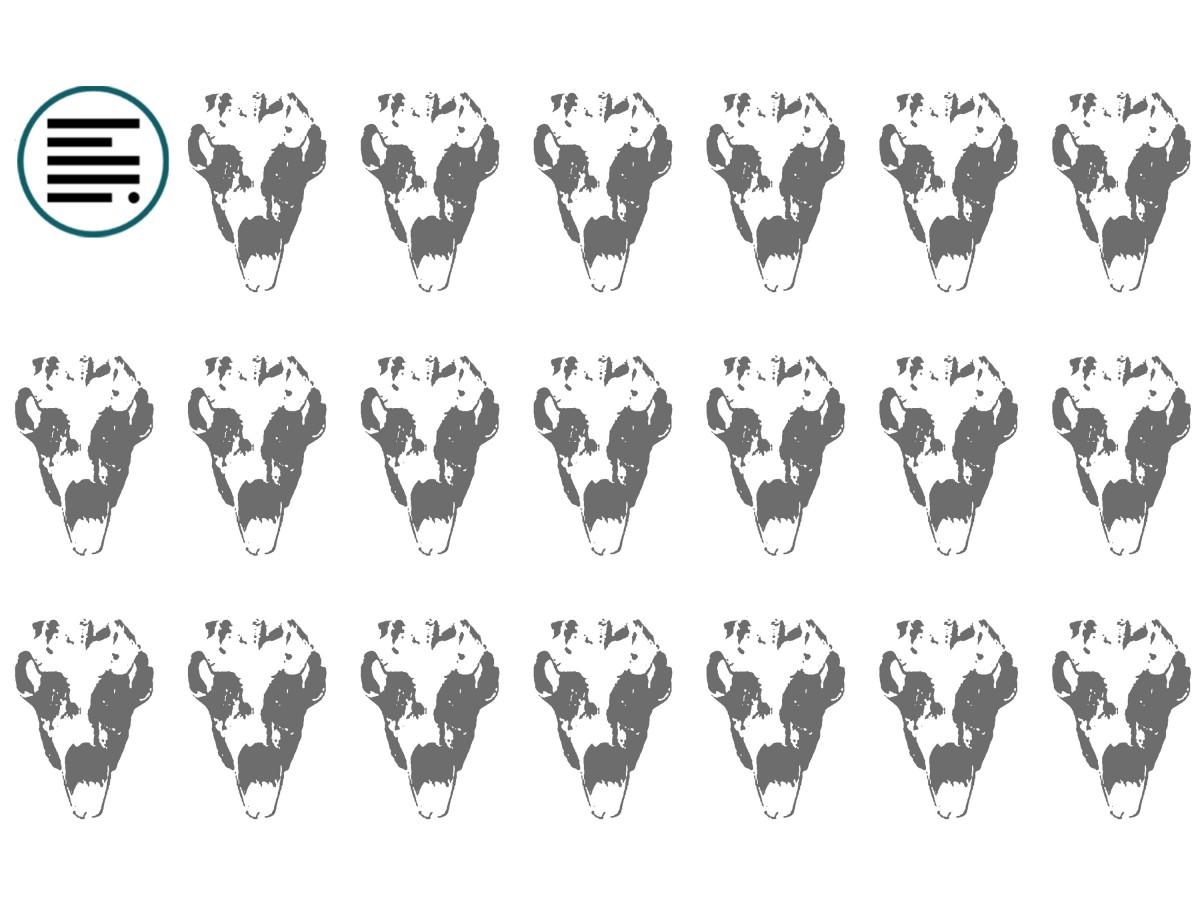 Illustrasjonsbilde av reinsdyrsskaller.