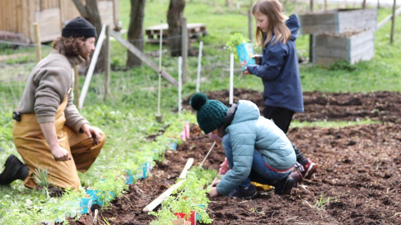 To barn og en voksen planter gulrot i åkeren.