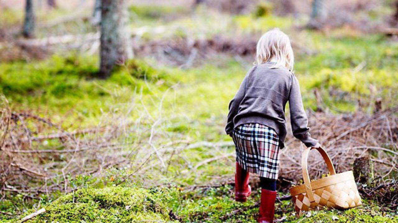 Liten jente i skogen bærer på en soppkurv